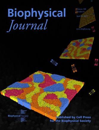 Kinetics of Asymmetric Phase Separation in Lipid Bilayers